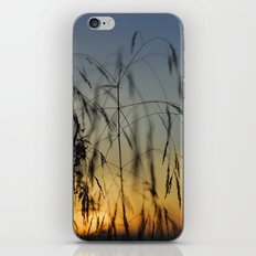 Branches at sunset iPhone & iPod Skin