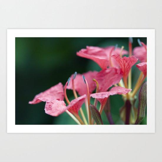 Softly Blow Petals Pink Art Print
