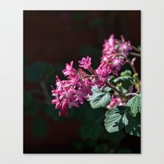 Ribes Buds Canvas Print