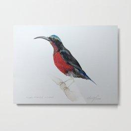 Watercolour Purple-Throated Sunbird Metal Print