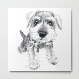Schnozz the Schnauzer Metal Print