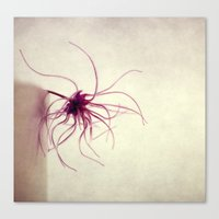 spider Canvas Prints featuring spider by Claudia Drossert