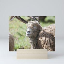 Sheep with crooked smile Mini Art Print