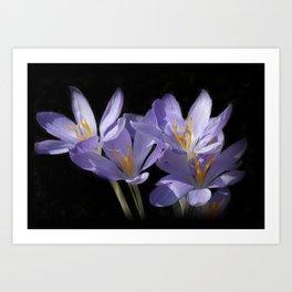 lilac crocusses on black Art Print