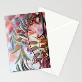 Branches of A Mountain Ash Stationery Cards