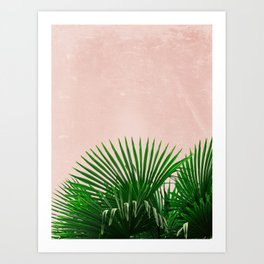 Palm Leaves On Pink Background Art Print
