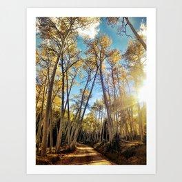 : aspens a glow : Art Print