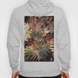 Marijuana Hoody