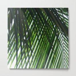 Palm in Las Palmas Metal Print