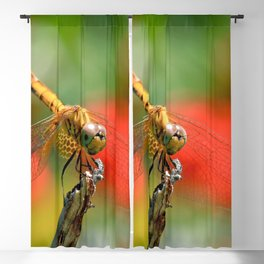 Dragonfly Macro Close Up Blackout Curtain