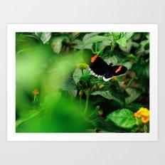 Butterfly - 5 Art Print