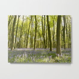 Bluebells of Itchen Wood Metal Print