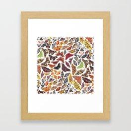 Saturniid Moths of North America Pattern Framed Art Print