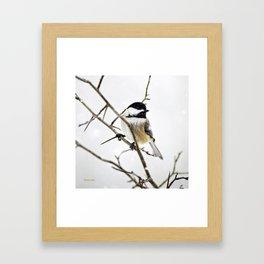 Snowy Chickadee Framed Art Print
