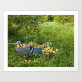 Picking Pears Art Print