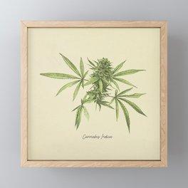 Vintage botanical print - Cannabis Framed Mini Art Print