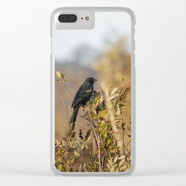 Blackbird in Autumn Light Clear iPhone Case