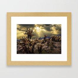Cholla Cactus Garden bathed in Sunlight in Joshua Tree National Park California Framed Art Print