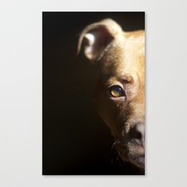 Pennie the Pittie Canvas Print