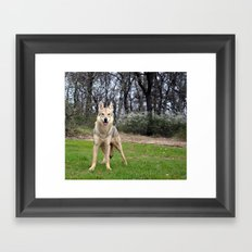 Czech Wolfdog Framed Art Print