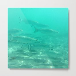 Watercolor Fish, Striped Mullet 01, St John, USVI Metal Print