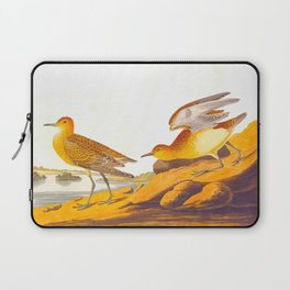 Buff-breasted Sandpiper Bird Laptop Sleeve