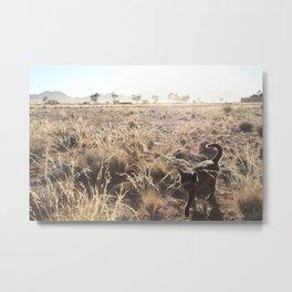 Desert Cat Metal Print