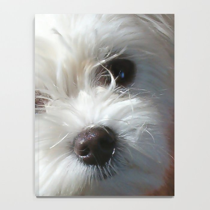 Cute Maltese asking for a treat Notebook