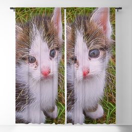 Extraordinary animals-Kitten Blackout Curtain