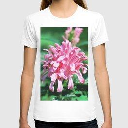 Brazilian Plume - Justicia carnea (Jacobinia carnea) T-shirt