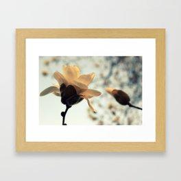 First Blush Framed Art Print