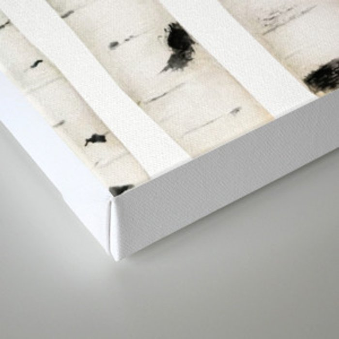birch horizontal Canvas Print
