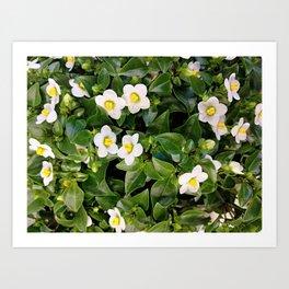 White summer flower Art Print