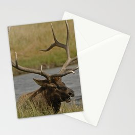 Bull elk with very large antlers Stationery Cards