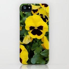 Pansies, Yellow Pansies iPhone Case