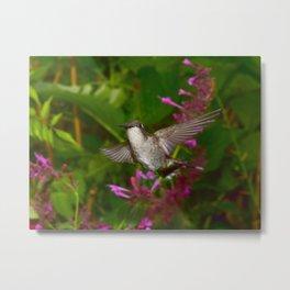 Hummingbird and pink agastache flower 44 Metal Print