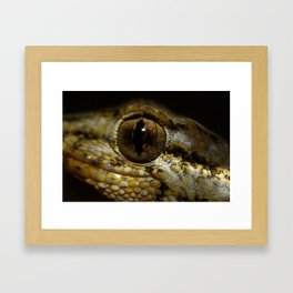 Gecko Running Framed Art Print