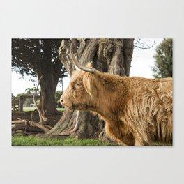 The Highlander Canvas Print