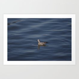 Seagull at the ocean Art Print