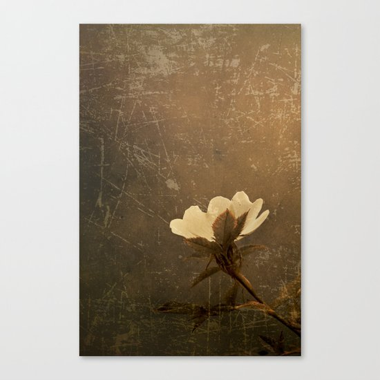 Wild Old Rose Canvas Print