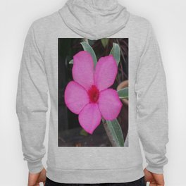 A BLUSH OF PINK Hoody