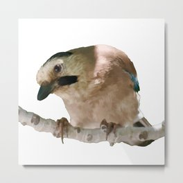 European Jay On Branch Vector Metal Print