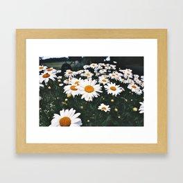 Dazey Framed Art Print