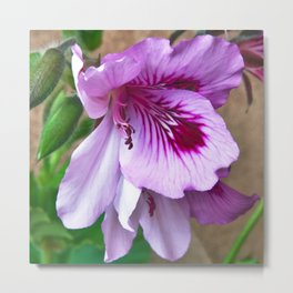 PURPLE BLOSSOM of Spring - Sicily Metal Print