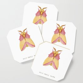Rosy Maple Moth Coaster