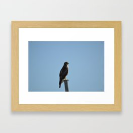 Coopers Hawk On A Post Framed Art Print