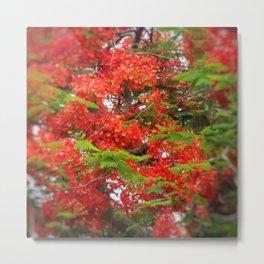 Lush Blooms DPGSS170603d Metal Print