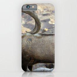 Nubian Ibex iPhone Case