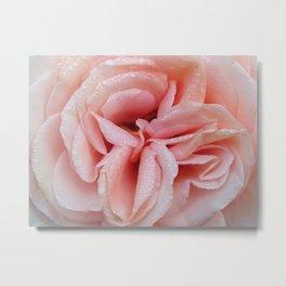 Sunset Celebration Rose Metal Print