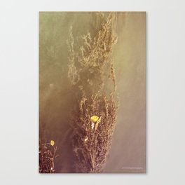 Water Plant Canvas Print